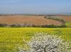 kvetoucí krajina